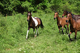 Batch of horses running