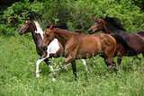 Three horses on pasturage