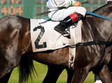 Jockey Leads Number Two Horse to Start Gate at Horserace