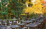 Nara foliage