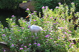 The egret in flowers