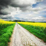 Country road with rapeseed field