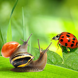Two snails and ladybug looking at green background