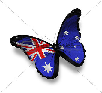 Australian flag butterfly, isolated on white