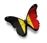 Belgian flag butterfly, isolated on white
