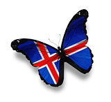 Icelandic flag butterfly, isolated on white