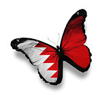 Bahraini flag butterfly, isolated on white