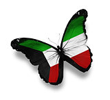 Kuwaiti flag butterfly, isolated on white