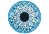 blue human eye, vector