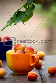 Apricots in a ceramic bowl