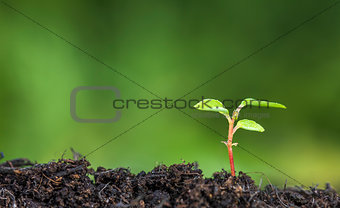Close up of plant sprouting from the ground with vivid green bokeh background