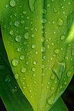 wet leaf close up
