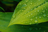 wet leaf close up