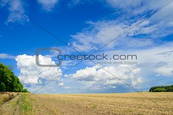 Beautiful Autumn Field under Dramatic Sky
