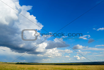 Beautiful Wheat Field under Dramatic Sky