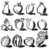 Temperate fruits sketch drawing vector set
