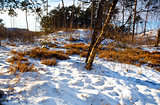winter in forest, Veluwe