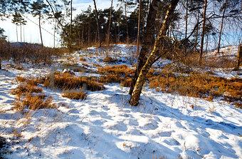 winter in forest, Veluwe