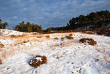 wild winter landscape in Veluwe