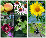 Collage of summer plants