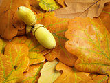 autumn oak leaves with acorn