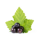 fresh ripe blackcurrant