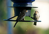 Two Birds at a Birdfeeder