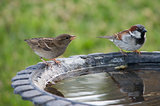 Two Birds at a Birdbath