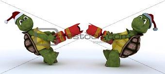 tortoise pulling christmas cracker