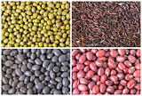 Beans and Grains Collage