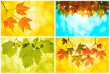 Fall Autumn Leaves Collage