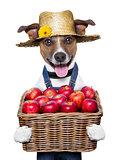 farmer dog