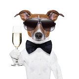 cheers dog