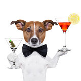 cocktail dog martini glasses