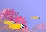 Three Foxface Rabbitfish among the corals