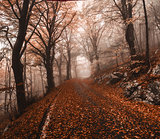 Autumn in the park of Campo di Fiori, Varese