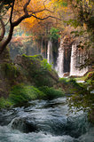 Beautiful view with the waterfall in the forest