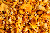 chanterelle mushrooms on the entire frame