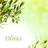 Olive leaves border