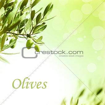Olive leaves border