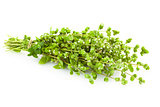 Bunch of fresh Oregano herb /  Majoram  /  isolated