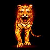 Fire tiger