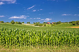 Corn field in agricultural rural landscape