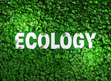 ecology word among the grass