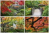 Japanese Garden in the Fall Collage