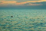 Sea after sunset near the beach