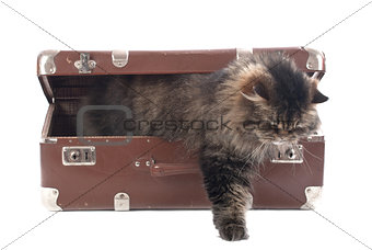 Cat gets out of an vintage suitcase