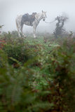Horse in a misty forest