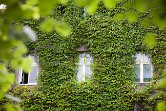 three windows in leaves