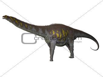 Argentinosaurus on White